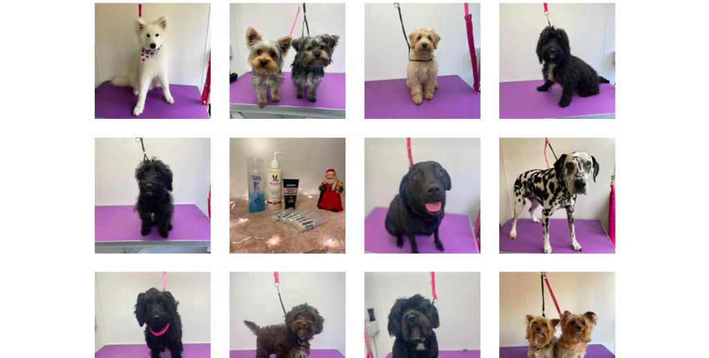 rikkiwebster.com website design and build groom and glow dog groomer bushey 2
